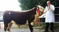 Price leader at Nenagh, Knockmountagh Drifter' sold for €3700 with exhibitor John McKiernan, Co. Louth