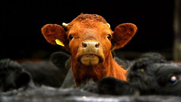 'Let us hope that all farming interests, and others, support the Beef Plan Movement when it holds a national protest outside the Dáil on Wednesday at noon.' Stock image