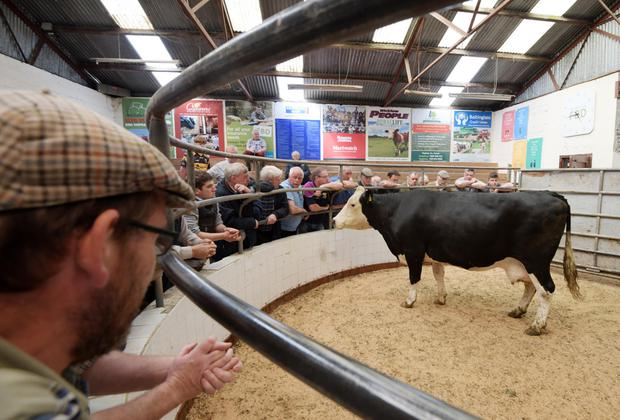 Beef farmers at Baltinglass Livestock Mart, Co Wicklow. Photo: Kevin Byrne