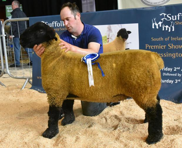 Sean Gahan holding Susan O'Keeffe's Overall Reserve Champion