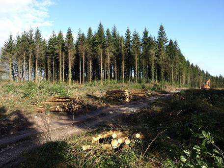 Unable to see the wood for the trees: the folly of monocultures has been amplified in terms of forestry