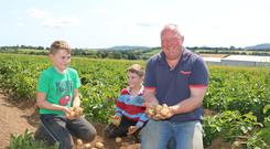 The spuds are up: Gavin Tully with is sons Luke (11) and Dylan (8) in a field of organic potatoes on the family farm near Camolin in Wexford.