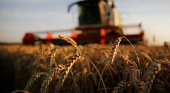 A farmer harvests wheat during sunset. REUTERS/Pascal Rossignol