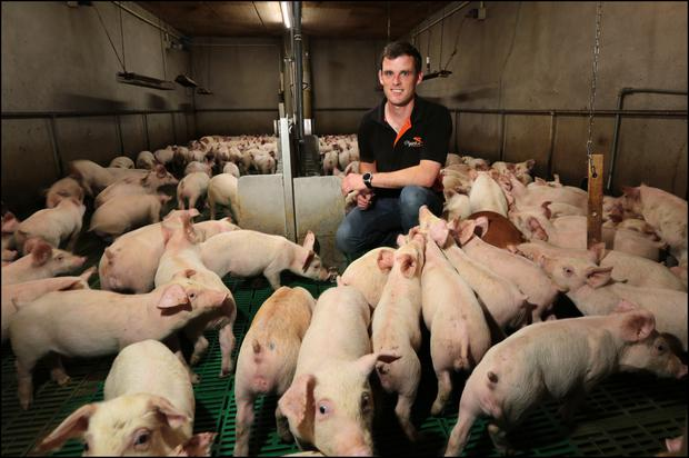 In recent months Jonathan has completed a full refurbishment of the 540-sow unit and other facilities on the farm