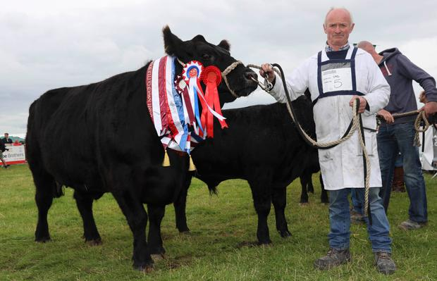 The champion Angus, Mayokarin, owned and shown by Gerry Kilgannon from Mayo Abbey, Claremorris, Co Mayo at Tullamore Show. Photo by Alf Harvey