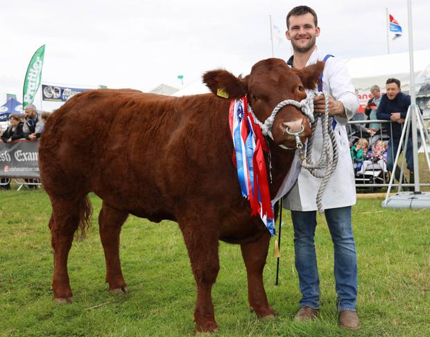 The senior commercial champion Peppa shown by Mark Maxwell and owned by the Maxwell brothers from Roscommon at Tullamore Show. Photograph: Alf Harvey