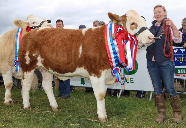 The champion Simmental, Jubilant Fabulous, owned by Garrett Behan from Ballyfin, Co Laois and shown by Lyndsey Behan at Tullamore Show. Photograph: Alf Harvey