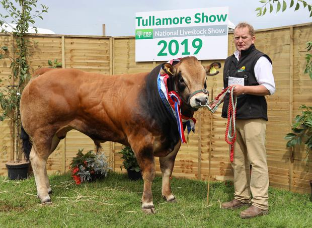 The champion Parthenaise, Golden River Nevin, shown and owned by Mark Winterbotham from Aughrim, Co Wicklow at Tullamore Show. Photograph: Alf Harvey