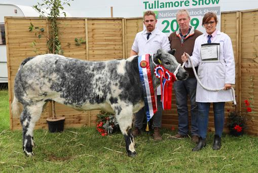 The champion Belgian Blue owned by Dan, Tim and Denise O'Donovan from Dunmanway, Co Cork at Tullamore Show. Photograph: Alf Harvey