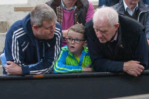 Three Generations of Fitzmaurice's from Kilmore, Co Roscommon at Elphin Mart. Killian, with his father Gerry and Grandfather, Peter Joe.