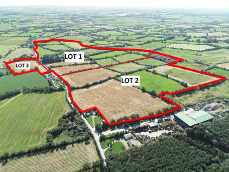 Big potential: The farm, located 3km from Ferns, will go under the hammer in lots