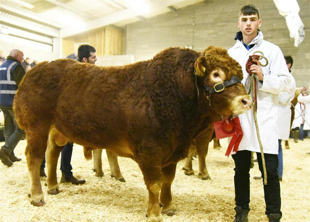 Oisin Cullen, Ballinahinch, Newtownmountkennedy. Co Wicklow with his first prize winner, Ballinahinch Nero 2 sold for €4,100.