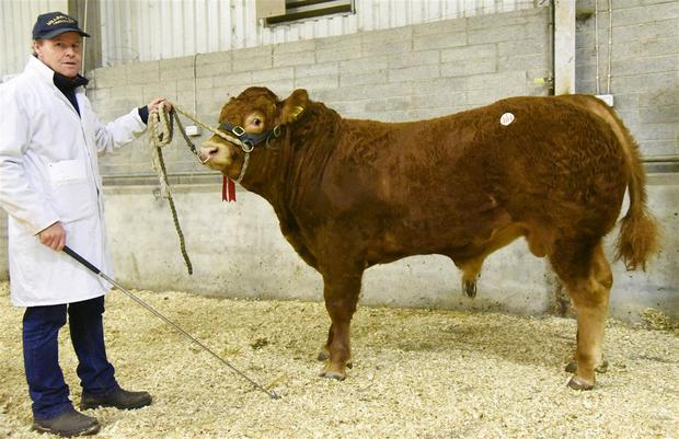 Mark Smith with Millbrook Noticabull, Reserve Junior Male Champion exhibited by William Smith, Millbrook, Oldcastle, Co Meath.
