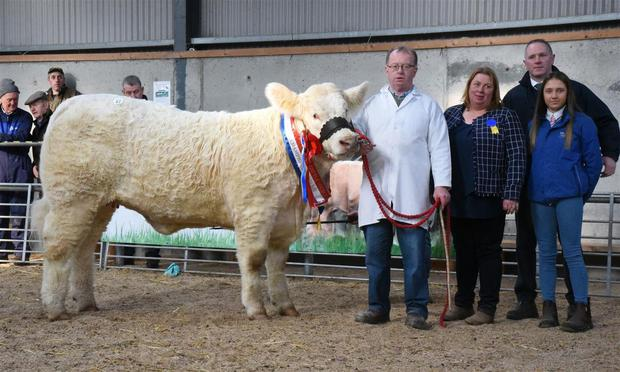Junior Champion, Goldstar Osanna, sold for €11,000, at the Irish Charolais Cattle Society Premier Show and Sale of heifers at GVM Mart, Tullamore with Martin Ryan, Copperfield House, Cabra, Thurles, exhibitor, Tracey Gunn, Noel McGoldrick, President, ICCS, and Veronica Moody