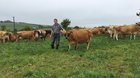 Cash cows: The Aherns have a herd of 120 cows, 90pc of which are pure dairy, and they sell 650 litres of milk weekly direct to customers and retailers