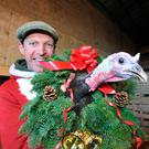 Gobbling up business: Darragh has 188 turkeys to sell in the run-up to Christmas