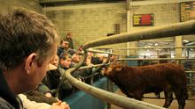 Martin Coughlan asks will Ireland become just another cheap beef producer?