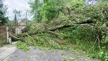 Tree damage during a storm is usually considered a 'natural' event