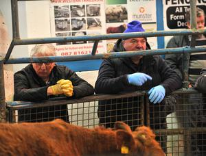16/03/2020  Trying to stop the spread of Coronavirus.........Farmers wear protective gloves at the sales ring at Tuam mart. Photo: Ray Ryan