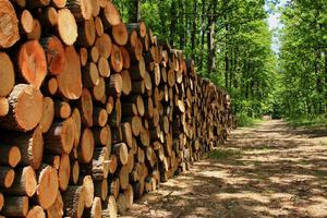 There are attractive incentives to plant forestry but Ireland is not meeting half its targets.