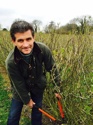 Since Ribena stopped buying from Irish growers two years ago Des Jeffares has become the last commercial blackcurrent grower in the country.