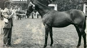 Jack Powell with Royal Frolic winning a championship at the RDS Dublin in the early 1970s, before the same horse won the Cheltenham Gold Cup in 1976