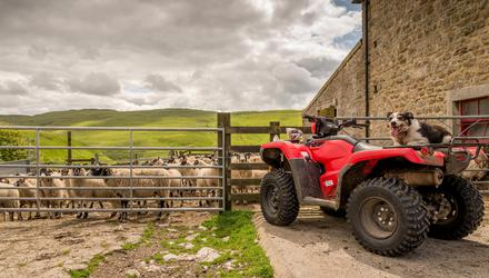 'Worth its weight in gold': A quad bike is a very useful piece of equipment on a farm Photo: Michael Garner