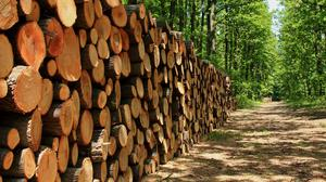 A domestic wood shortage could have serious knock-on impacts for the construction sector, the Hardware Association Ireland (HAI) has said (stock photo)