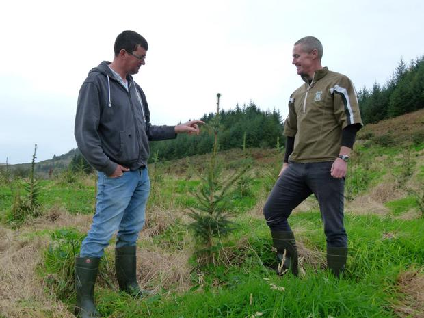 Donal McCarthy (left) in his forestry plantation.