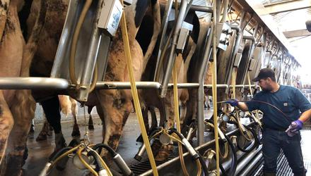 Global milk output for May was up 3.3pc compared to 2020.