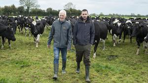 In clover: Gerry and Niall Moloney on their farm at Badgerfort, Crecora, Co Limerick. Photos: O'Gorman Photography