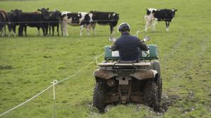 The research finds Irish dairy farmers enjoy the best net profit margins by a considerable distance