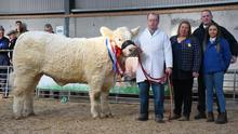 Striking gold: Junior Champion Goldstar Osanna sold for €11,000,  at the Irish Charolais Cattle Society Premier Show and Sale of heifers at GVM Mart, Tullamor. The heifer is pictured with exhibitor Martin Ryan, Copperfield House, Cabra, Thurles; judge Tracey Gunn; Noel McGoldrick, President, ICCS, and Veronica Moody, co-judge.