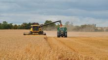 Harvest management: Fields or parts of fields with known problems should be harvested last where possible. Machines should then be cleaned down before moving to the next field PHOTO: ROGER JONES