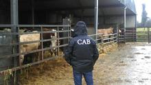 CAB officers at a previous farm raid. Image: Gardai