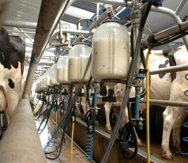 Farm buildings exempt from normal planning requirements can include milking parlours (subject to the total size of all buildings on the farm)