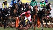 Ruby Walsh takes a fall from Willie Mullins' Abbyssial in the 2014 Cheltenham Triumph Hurdle