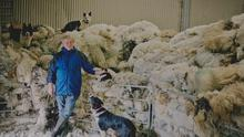 Bernard King with his sheepdogs. Picture: FoKiss Photography.