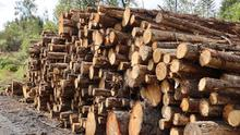 McAuley said that a new streamlined appeals process had also allowed environmentalists and others to easily submit blanket objections to most forestry projects, with 60,000 tonnes of timber stalled in one week alone this month (stock photo)