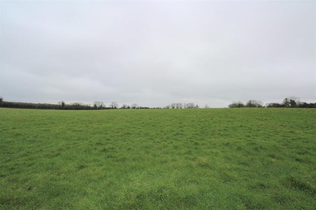 This 50ac of grazing land near Rochfortbridge is available on a five-year lease for cattle only