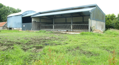 The yard consisted of a three-column slatted shed, a two-column haybarn, yard and a cattle crush.