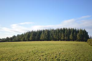 A 9.5ac plot of mature forestry no longer commands premiums