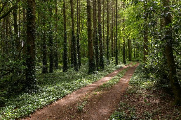 The woodlands include 74ac of mature trees and 20ac of commercial plantation