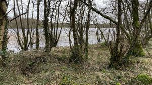 The 8ac parcel of ground at Skeagh Lake could have potential as a site for a 'scenic rural hideaway' says auctioneer Peter Murtagh