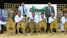 The winners in the ewe lamb class line out with Edward Buckley, chairman Irish Charollais Sheep Society and judge Melvin Mathews