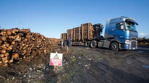 Timber mills and manufacturers have been forced to turn to imports due to the slump in supplies here