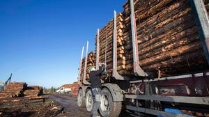 Logs loaded for transportation in Roscommon. Photo: Brian Farrell