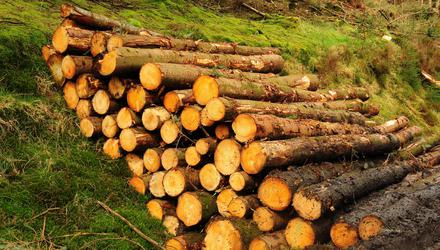 Just 2,434ha of new forests were created in the country last year