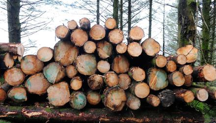 The forestry sector has experienced a collapse in felling and planting activity over the last three years. Photo: Roger Jones