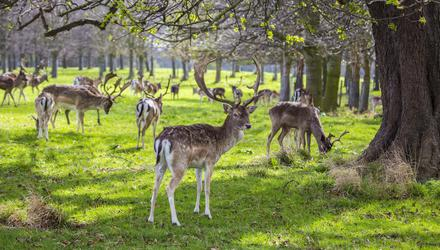 Shane O'Loughlin said the deer in Wicklow are an infestation